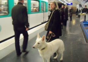 Prendre le métro avec son chien comme àToronto