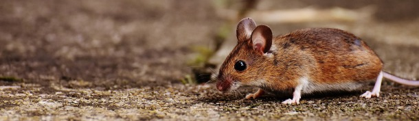 mouse-1708379_1920