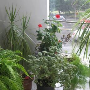 L'en-vert : jardin de psychologie àl'UQAM