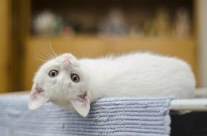 Chronique «La fabrique à bonheur» : Est-ce qu'on attend d'un chat qu'iljappe?