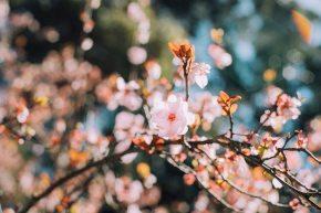 «Chroniques d'une névrotique» – Le Naïkan : vers une thérapie humanistejaponaise
